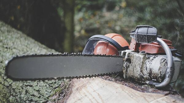 chainsaw on top of a fallen tree trunk